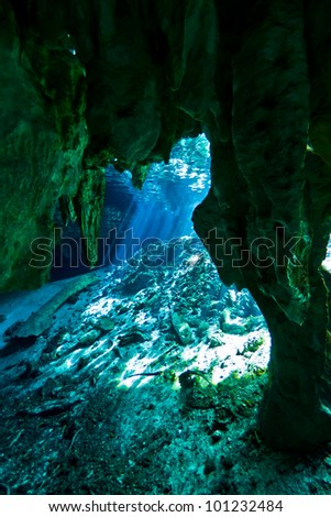 the entrance to gran cenote in tulum, mexico