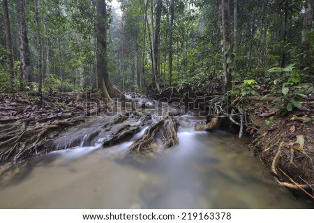 The equator green jungle and rain forest  with trees and bushes , clean and cool fresh water river flows through cascades stones and roots  - stock photo