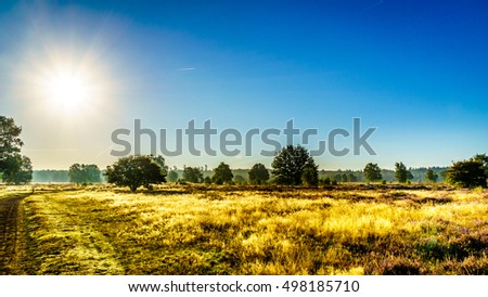 The Ermelose Heide with Calluna Heathers in full bloom under blue sky and fog over the field on the Veluwe in the Netherlands