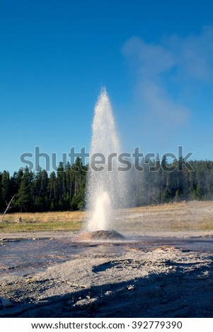 The eruption of  Pink Cone Geyser is a cone-type geyser in the Lower Geyser Basin of Yellowstone National Park in the United States