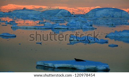 The evening of the Antarctic shore - stock photo