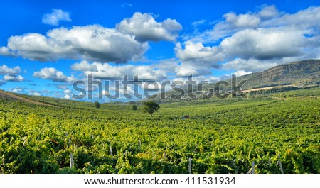 The evening sun illuminates the vineyard surrounded by picturesque mountains - stock photo
