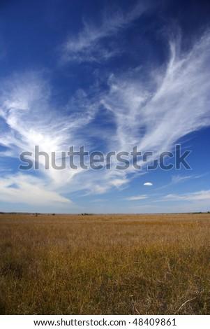 The Everglades - stock photo