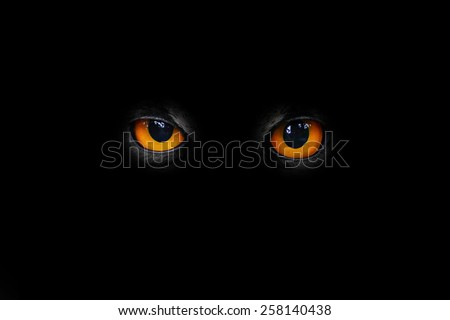 The evil eyes. - stock photo