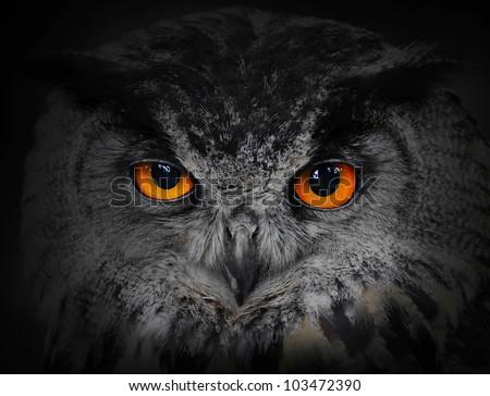 The evil eyes. ( Eagle Owl, Bubo bubo). - stock photo
