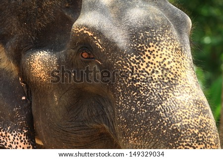 The eye elephant - stock photo