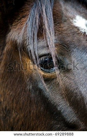 The eyes of a horse