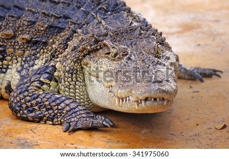 The eyes of freshwater crocodiles stare at its prey. - stock photo