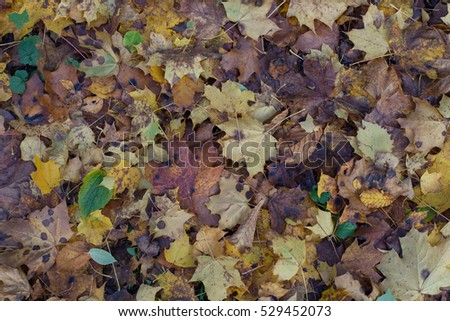 The fallen leaves in autumn park
