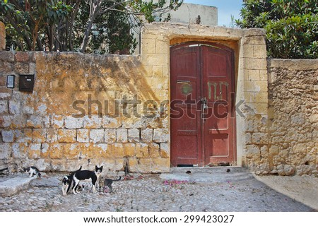 The family cats walking near to vintage greek house.Rhodes.Greece