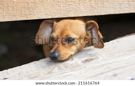 The family dog who lives on a farm   - stock photo