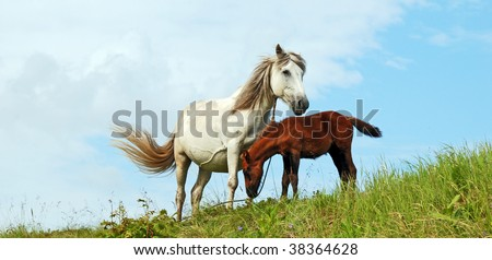 The family of horses
