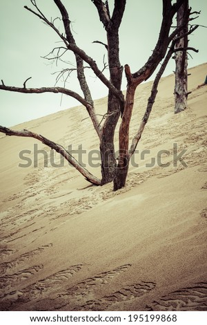 The Famous dune of Pyla fences, the highest sand dune in Europe - stock photo