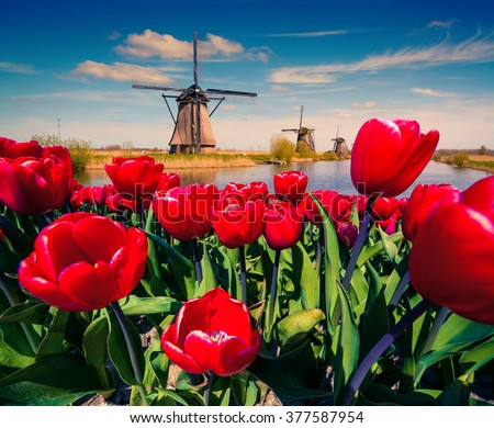 The famous Dutch windmills. View through red tulips on the Netherlands canals. Creative collage. - stock photo