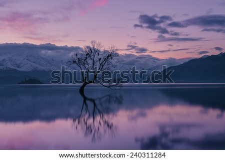 The famous Wanaka tree just after sunset  - stock photo