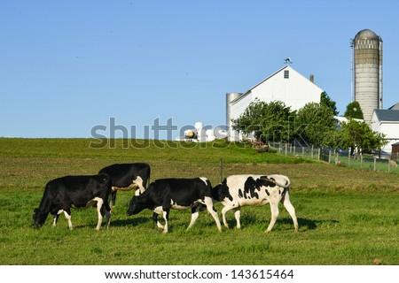 The Farm - stock photo