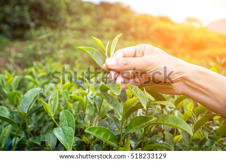 Farmer Beautiful People Form Indian Asian Stock Photo 518233129 ...