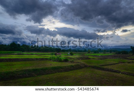 The Farmer planting on the organic paddy rice farmland