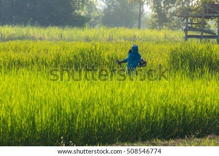 The farmer working at rice field.