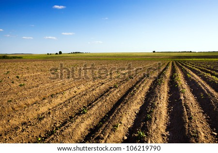 the field plowed in connection with landing of potatoes - stock photo