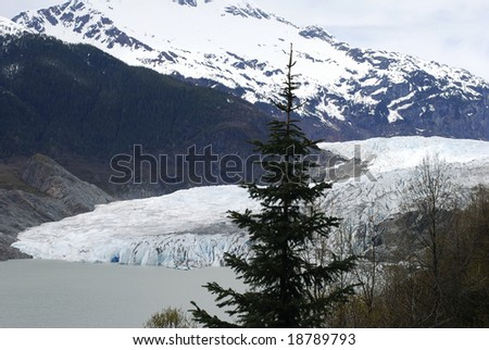 The fir-tree with Mendenhall Glacier in a background (Juneau, Alaska). - stock photo