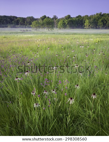 The first light from a rising sun falls on Churchill Prairie Nature Preserve, where coneflower and purple prairie clover dot the native grasses.  DuPage County, Illinois.  - stock photo