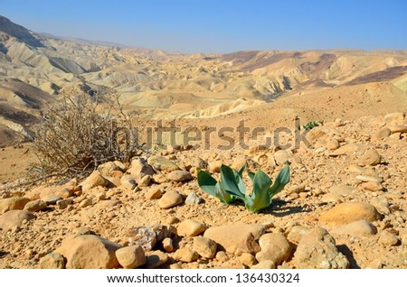 The first plants in the desert in the spring. Ein Avdat. Israel - stock photo