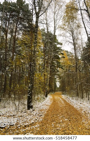 the first snow in the autumn forest