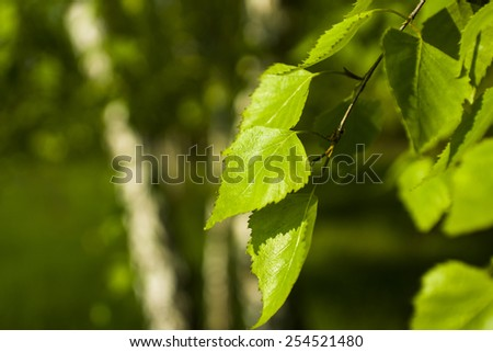 The first spring gentle leaves, buds and branches macro background - stock photo