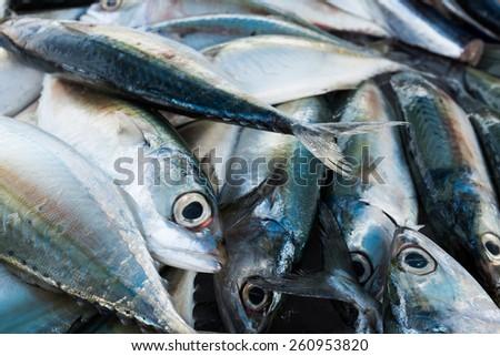 the fish  - stock photo