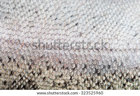 The fish scale  - stock photo