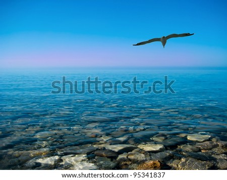 the flight of seagull above the Black sea - stock photo