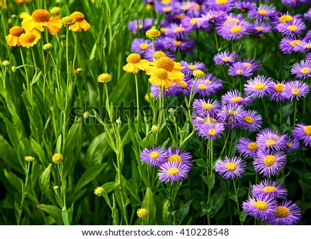 The floral background with violet and yellow flowers - stock photo