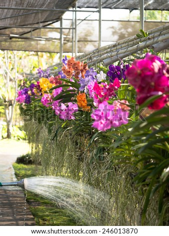 The flow of water from the garden watering flows roots hanging orchids - stock photo