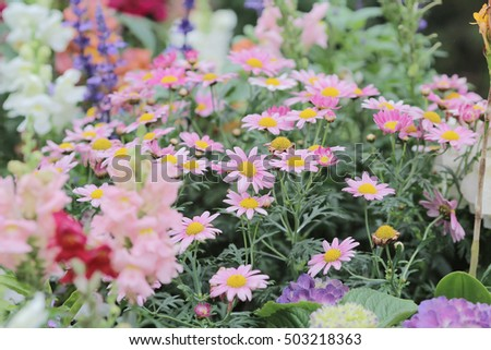 the flower beds in formal garden at spring