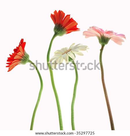 The flower fluttered - stock photo