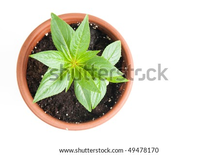 The flower in a pot - stock photo