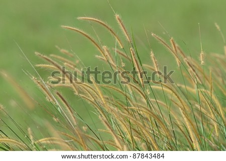 The flower of grass - stock photo