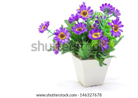 The flowers in pot isolated isolated on white background. - stock photo