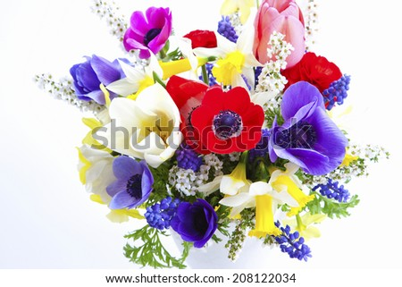The Flowers Of Narcissus And Anemone
