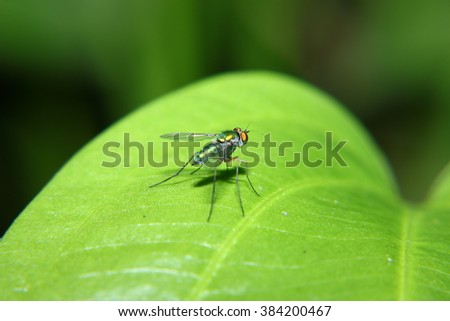 The fly on green leaf