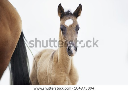the foal near his mother - stock photo