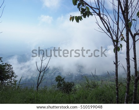 The fog in forest