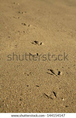 The footprints of a seagull in the sand