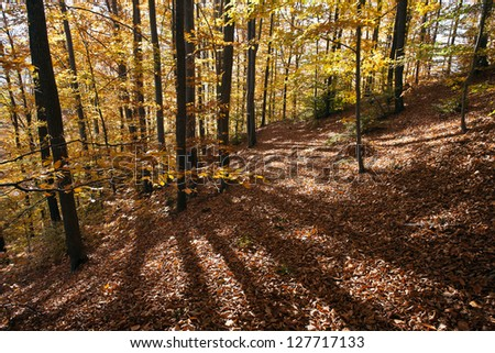 The forest and october