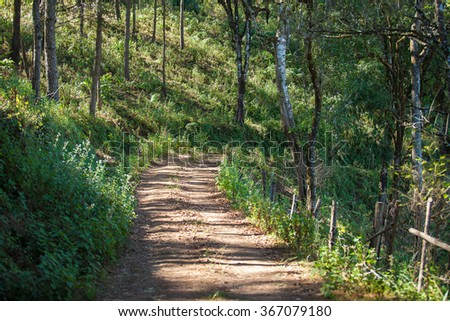 The Forest and Road with Sunbeam in the morning. - stock photo