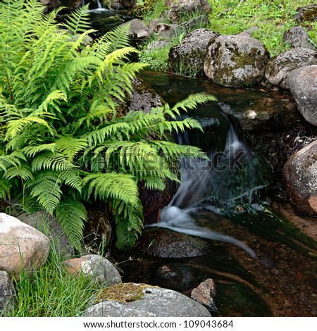 The forest creek - stock photo