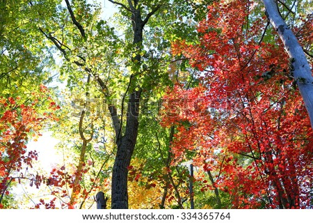 The Forest dressed in it Fall Colors - stock photo