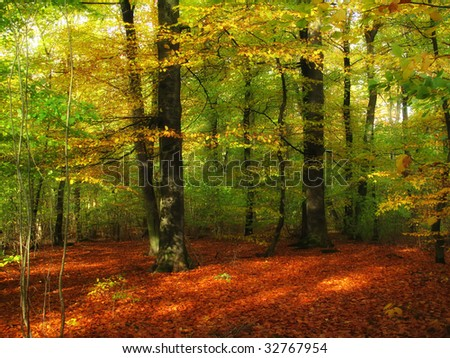 The forest in early fall - stock photo