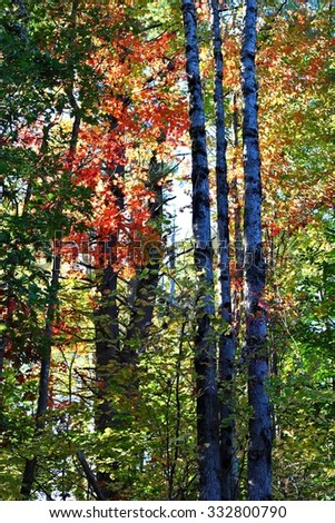 The Forest in Fall - stock photo